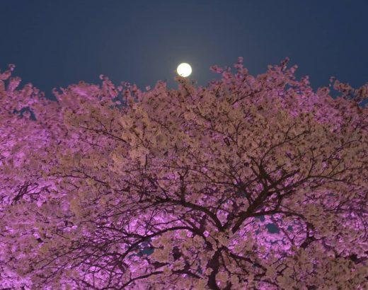 Tonight is Pink Supermoon! 🌕💗