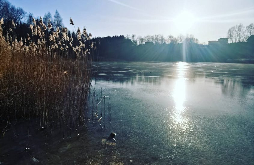 The beauty of nature stopped by ice… 😍💕🧊❄️