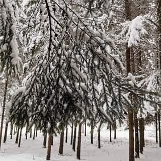 Winter's Tale 🤩👣❄️⛄🌨️