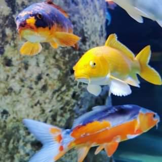 Just amazing shot! 🤩💖🐠🐡 #visitmalta #malta #aquarium #fish #fishtank #travel #tr
