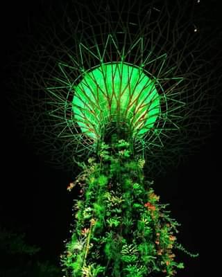 Singapore beautiful Super trees 😎😍🇸🇬