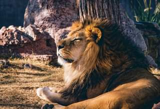 The Leo's season begins! Today, the Sun is moving into the sign of the Leo, so n